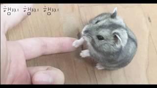 차라리단추 - 햄찌햄찌햄찌