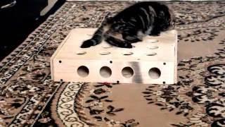 Самодельная игрушка для кошки