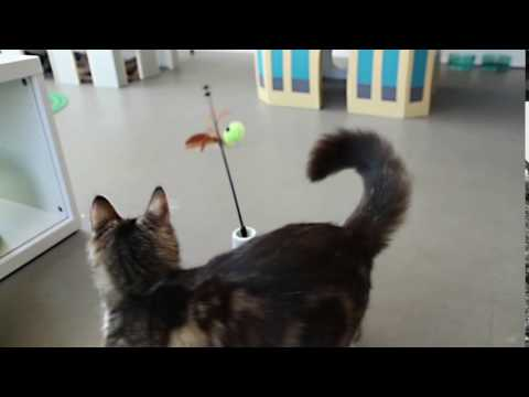 Petlinks Pure Commotion Youtube