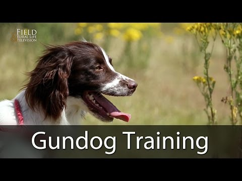 Gundog Training With Andy Cullen