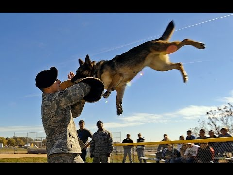 The 8 Most Dangerous Dogs in the world