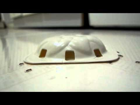 Karınca Yemi, karınca kapanı, karınca tuzağı, raid