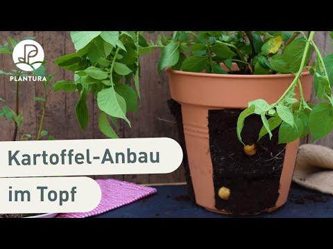 kartoffeln-pflanzen:-so-gelingt-der-anbau-im-topf-(anleitung)