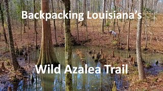 Backpacking Louisiana's Wild Aząlea Trail