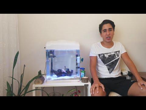 Akvaryum Temizliği Nasıl Yapılır | Akvaryum Cam, Dış Filtre ve Dip Temizliği