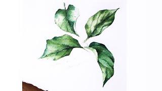 [베리현 수채화]초록잎 그리기| Watercolor p…
