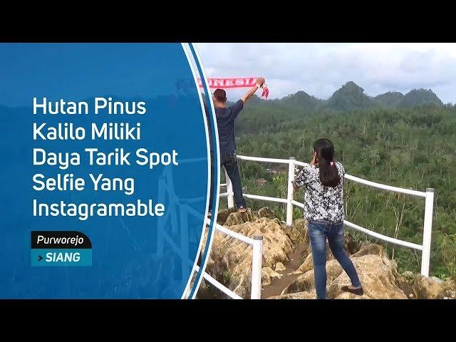 Hutan Pinus Kalilo Miliki Daya Tarik Spot Selfie yang Instagramable