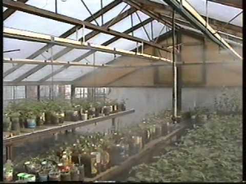 видео: Туманообразование в теплице
