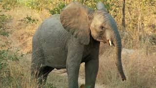 Удивительная Природа! - 🐎 Милые и Смешные Животные 🐘 - Интересное видео