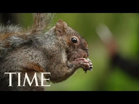 'Emotional Support Squirrel' Gets Woman Kicked Off Flight & Then Everyone Just Had To Deplane | TIME