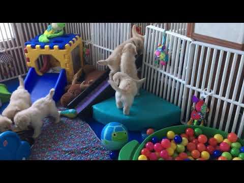 Playroom expansion