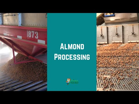 Almond Processing: Pre-Cleaning, Hulling/Shelling & Processing