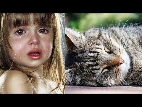 Видео как кошки умирают