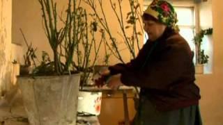 Дачная инспекция. Как выращивать розы(Розу хоть и называют королевой цветов, но вырастить ее можно на самой обычной некоролевской даче. Достаточн..., 2011-03-28T07:47:09.000Z)