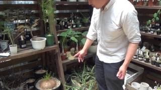 塊根植物の育て方・日常管理