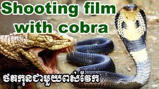 Shooting Movie With Cobra Snake ថតកុនជាមួយពស់វែក