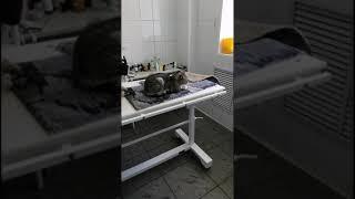 Двух котов выкинули с восьмого этажа в Томске