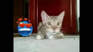 Приколы про кошек  даша гуз канал злата и даша