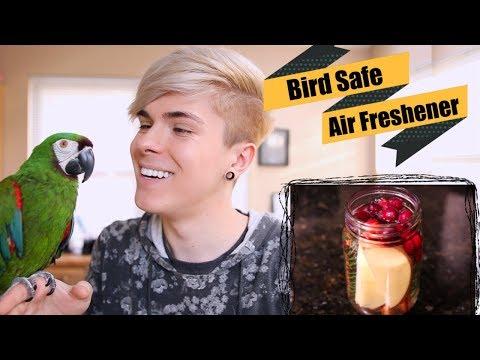 DIY Bird Safe Air Freshener! *Simmer Pots*