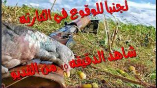 طريقة تفكيك وتركيب بندقيه الصيد  الشتوكر 3500+الكرال التركي