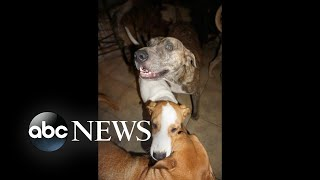 100-000-donated-to-bahamas-woman-who-took-in-97-rescue-dogs