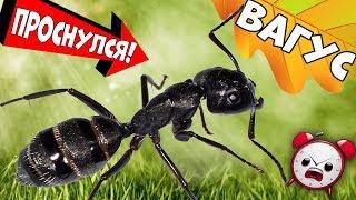Муравьи-гиганты Вагусы после зимовки. Что не так с муравьиной фермой на 3д принтере?!