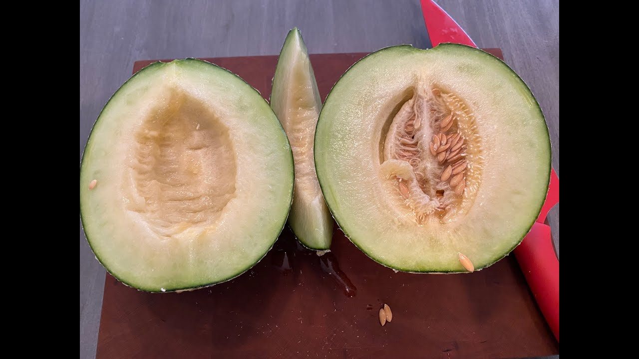 Tasting Hydroponic Melon   It Is Amazing!!!