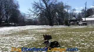 Rosilee Off Leash Dog Obedience Training Memphis