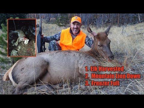 Colorado Elk Hunting + Surviving A Near Mountain Lion Attack