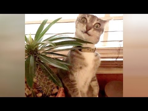 Watch and you will die laughing! Really the FUNNIEST ANIMALS!