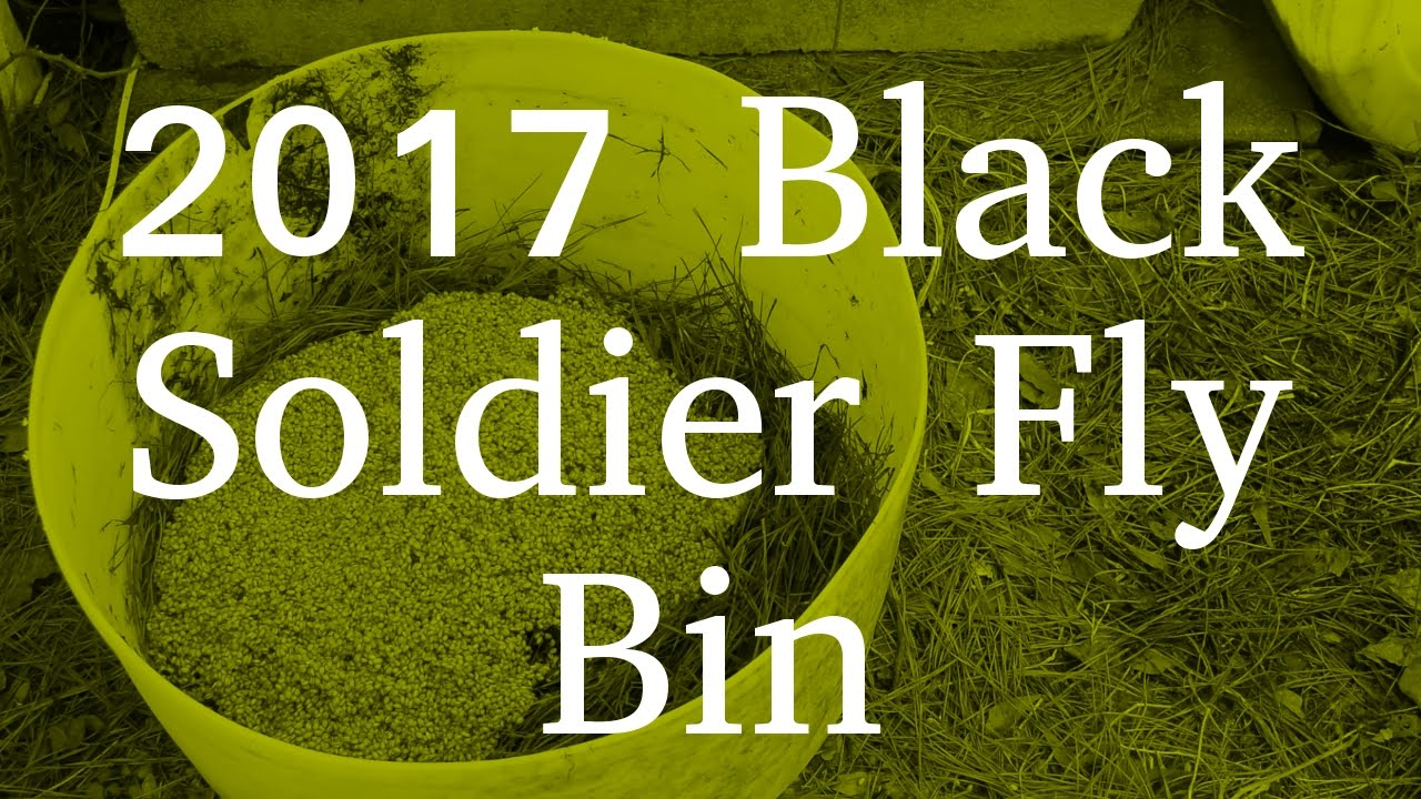2017 Black Soldier Fly Bin Bluegill Youtube
