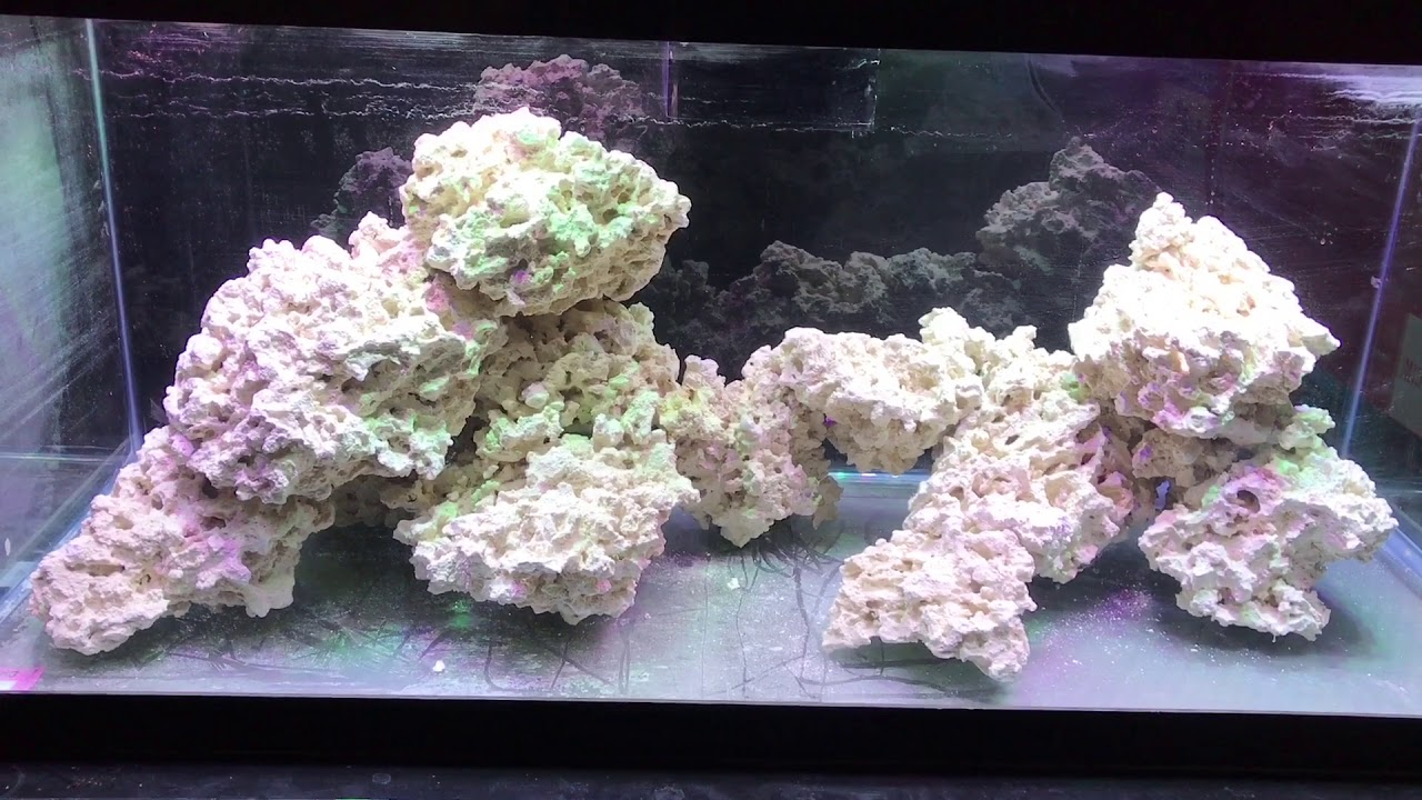 Aquascaping The 75 Gallon Reef Tank - YouTube