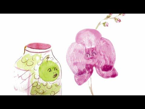 Le petit pois et l'orchidée - FR (2012)