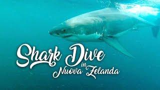 UN TUFFO TRA GLI SQUALI - Shark Dive in Nuova Zelanda