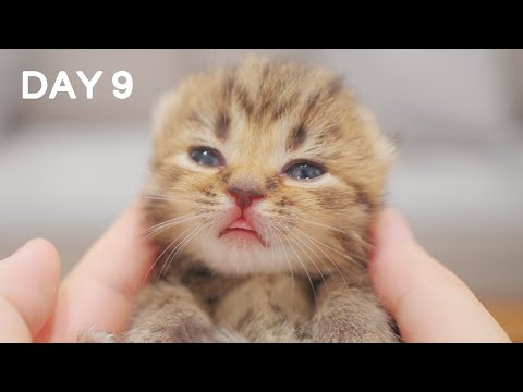 Day 9 - Crispy Open Eyes | Day 1 to Day 100 Kittens Grow Up Vlog