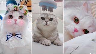 Tan chảy với những chú Mèo siêu dễ thương #2 | Yêu Pets