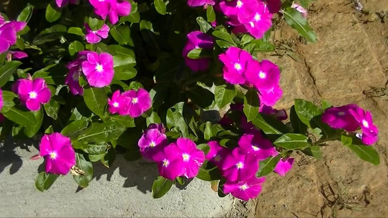 Planta No Sertão