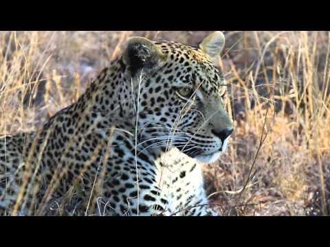 South African Safari - July 2015