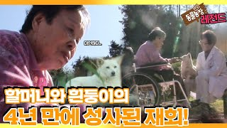 [TV 동물농장 레전드] '4년 만에 만난 할머니와 흰둥이' 풀버전 다시보기 I TV동물농장 (Animal …