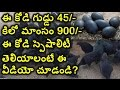 Kadaknath Chicken Specalities Will Shock You
