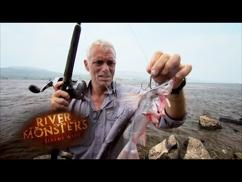 Goliath Tiger Fish Outwits Jeremy Wade | TIGERFISH | River Monsters