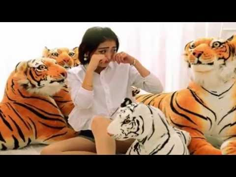 """animal compilation"" and funny video-tiger video"