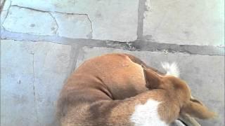 Mumbai stray dogs