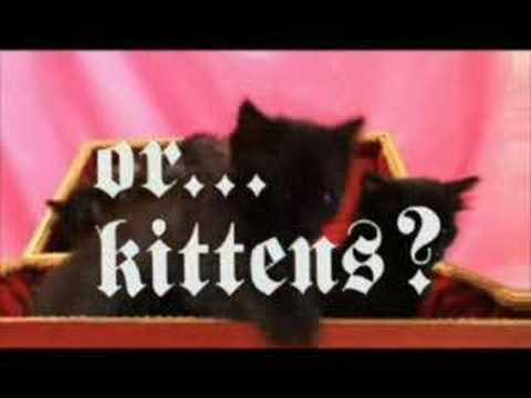 NLT vs. Kittens