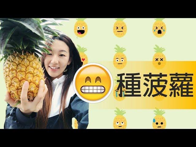 第一次種菠蘿!成功了!【我的澳洲田園生活】