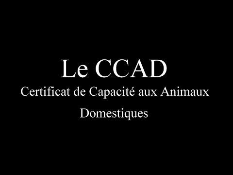 CCAD : mon expérience