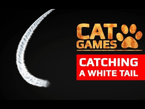 CAT GAMES  CATCHING A WHITE TAIL VIDEOS FOR CATS TO WATCH