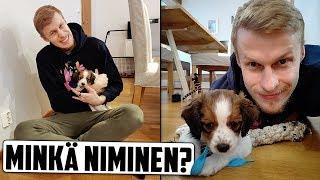 Meidän perhe hankki uuden koiran!