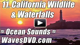 11 - CALIFORNIA Coastal Wildlife & Waterfalls - WAVES DVD Nature Video relax ocean sounds best beach