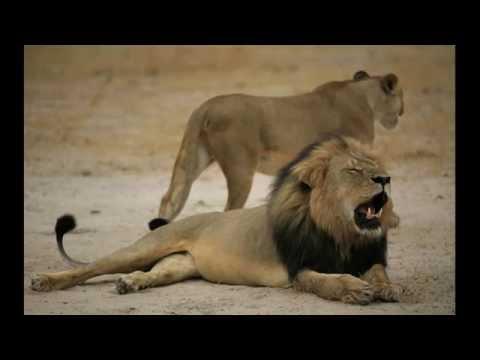 The Lion Sleeps Tonight-The Tokens